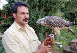 Falcons Mohr contact