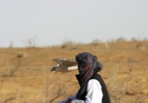 Falcons Mohr - الأمارات العربية المتحدة