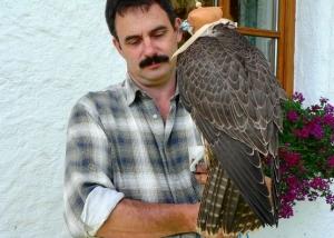 Falcons Mohr - ?