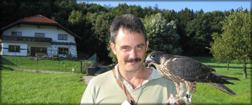 Falcons Mohr - file3.jpg